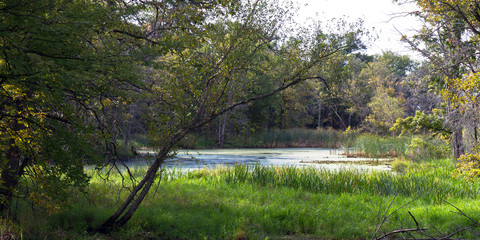 Wetland in Goose Island County Park, a backwater of the Mississippi River in Wisconsin