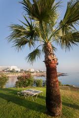 шезлонги под пальмой на побережье