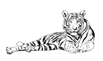 tiger drawn with ink from the hands of a predator tattoo logo
