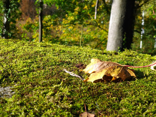 Autumn fallen leaf on the lawn of Luxembourg Park