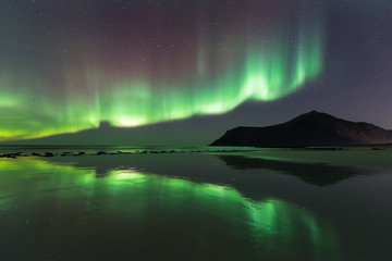 Northern lights in the lofoten islands, Norway
