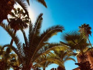 Paradise with the blue sky and palms