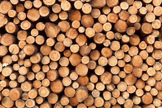 a background from fresh stack of logs