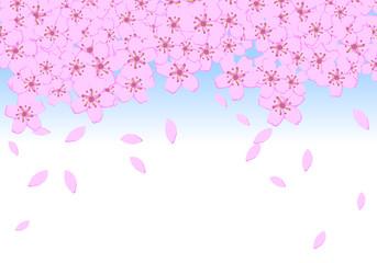 桜 ブルー 10