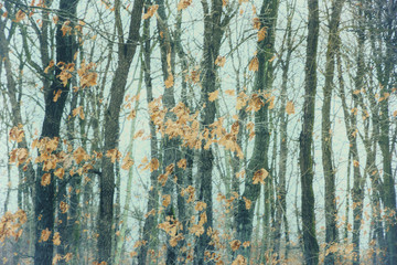 beautiful autumn leaves in the woods in winter. Art