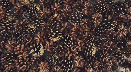 A lot of pine cones. Design mockup