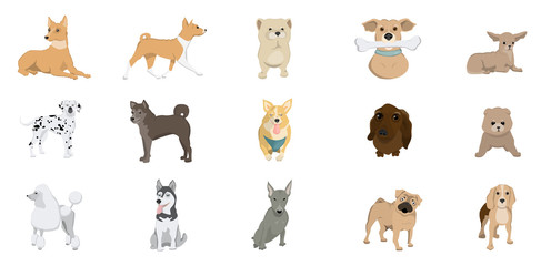 Dogs breed set.