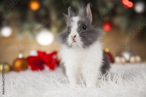 bunny with rabbit christmas red santa hat on winter decoration