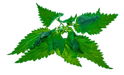 Nettles on a white background