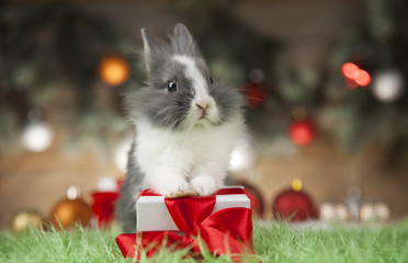 Little bunny,Funny rabbit on Christmas background