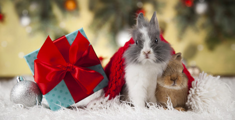 Bunny and Christmas background with winter decoration