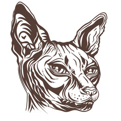sketch of a cat's head. Black and white Portrait of a Sphinx cat. Hand drawn cat breed Sphinx. Hairless naked cat. Graphic vector illustration.