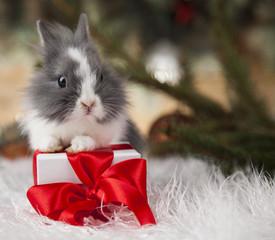 Holiday Christmas bunny in Santa hat on gift box