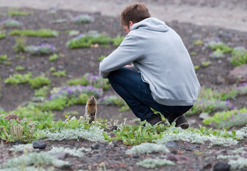 Bering gopher communicates with a tourist in the spring Kamchatka tundra of the mountainous region