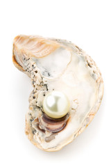 Single pearl in oyster sea shell