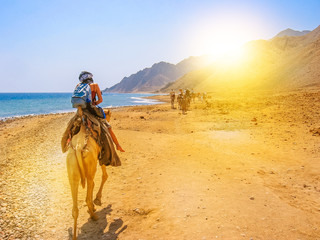 Printed kitchen splashbacks Egypt tourists and undefined woman on camels ride with Bedouins along the coast of the golden city famous for its sunsets and Blue Hole. Dahab, Red Sea, Sinai Peninsula, Egypt