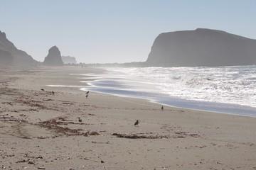 Birds Goat Rock Beach, California - Pelican, Oystercatcher, Seagull.