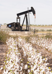 Texas Cotton Filed Textile Agriculture Oil Industry PumpJack