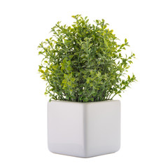 Small decorative plant