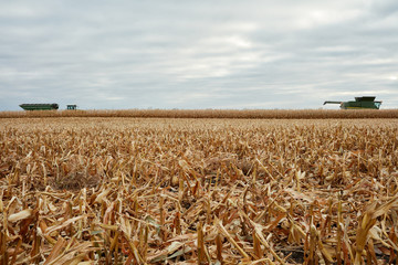 A reaped wheat paddock and harvesting machinery