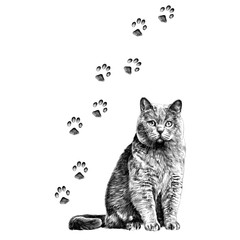 cat with paws sketch vector graphics monochrome black-and-white drawing