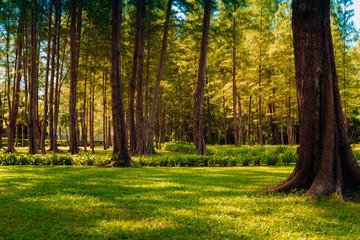 Green Leaf Forest Background