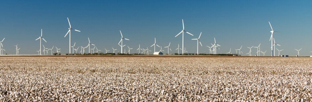 Wind Turbines Alternative Energy Texas Cotton Field Agriculture