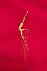 ginseng. ginseng on the background