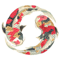 Japanese koi on white background. Illustration of the avaricious with Asian carp floating in a circle