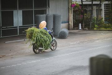 Biker carrying a lot of plants on a bike