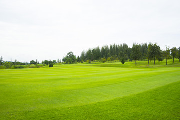 beautiful green grass of golf course