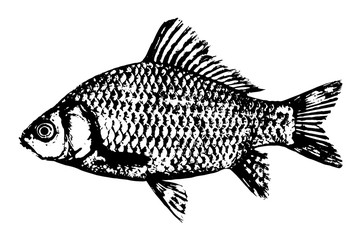 Fish silhouette icon