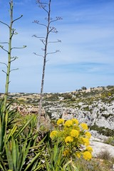View of Mediterranean plants and rugged landscape, Blue Grotto, Malta.