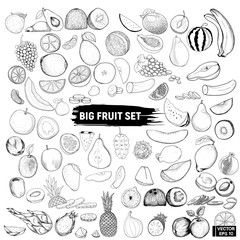 big set of fruits, doodle.
