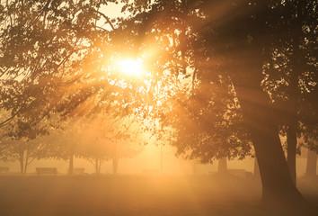 Sun rays shining through a tree in a foggy park during an autumn sunrise.