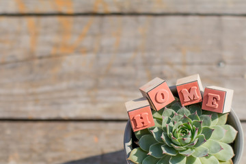 Decorative wooden letters forming word HOME. Flower Succulent Background Copy Space
