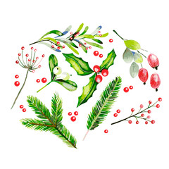 Watercolor vector illustration. Fir brancges, mistletoe, holly jolly, dor rose and guelder rose twig and berries.Greeting card. Hand drawn. Christmas, Xmas, New year. Party decoration, greeting card
