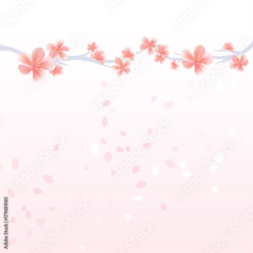 Flower background branches of sakura and petals flying isolated on flower background branches of sakura and petals flying isolated on light pink gradient background mightylinksfo