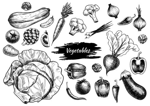 Set of vegetables. Hand drawn. Vintage style
