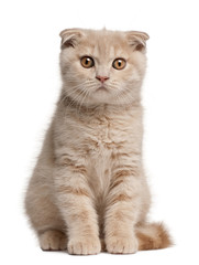 Scottish Fold Kitten, 1 months old, sitting in front of white background