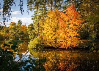 Photo of autumn trees and pond