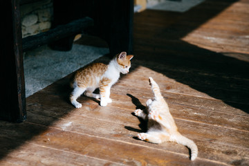 Two playing kittens
