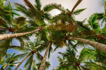 palm tree sky background
