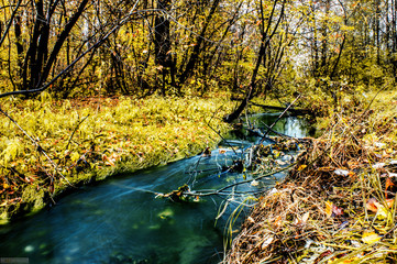 A small beautiful river flowing in the forest among the autumn nature
