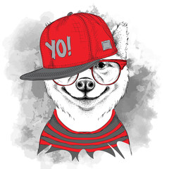 The poster of the sakita inu dog portrait in hip-hop hat. Vector illustration.