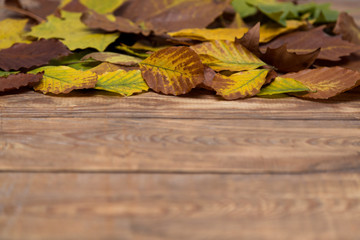 Autumn leafs on old wood blurred background.