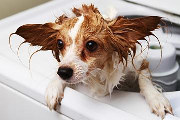 Pet Dog Washing