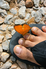 A beautiful orange butterfly sitting on a man's slippers