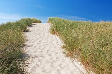 Fototapete - Weg über Dünen zum Strand bei Kampen auf Sylt an der Nordsee, Schleswig-Holstein