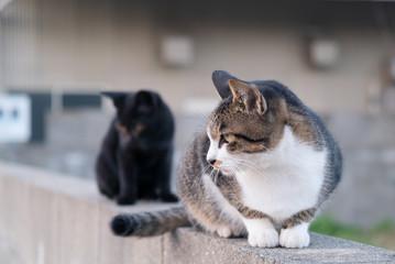 塀の上の2匹の野良猫